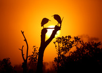Sunrise at the Glades
